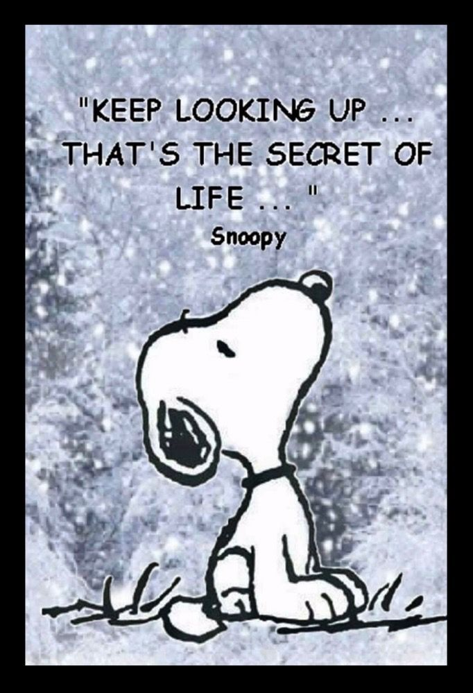 Keep Looking Up That S The Secret Of Life Snoopy Quotes Charlie Brown Quotes Snoopy Funny