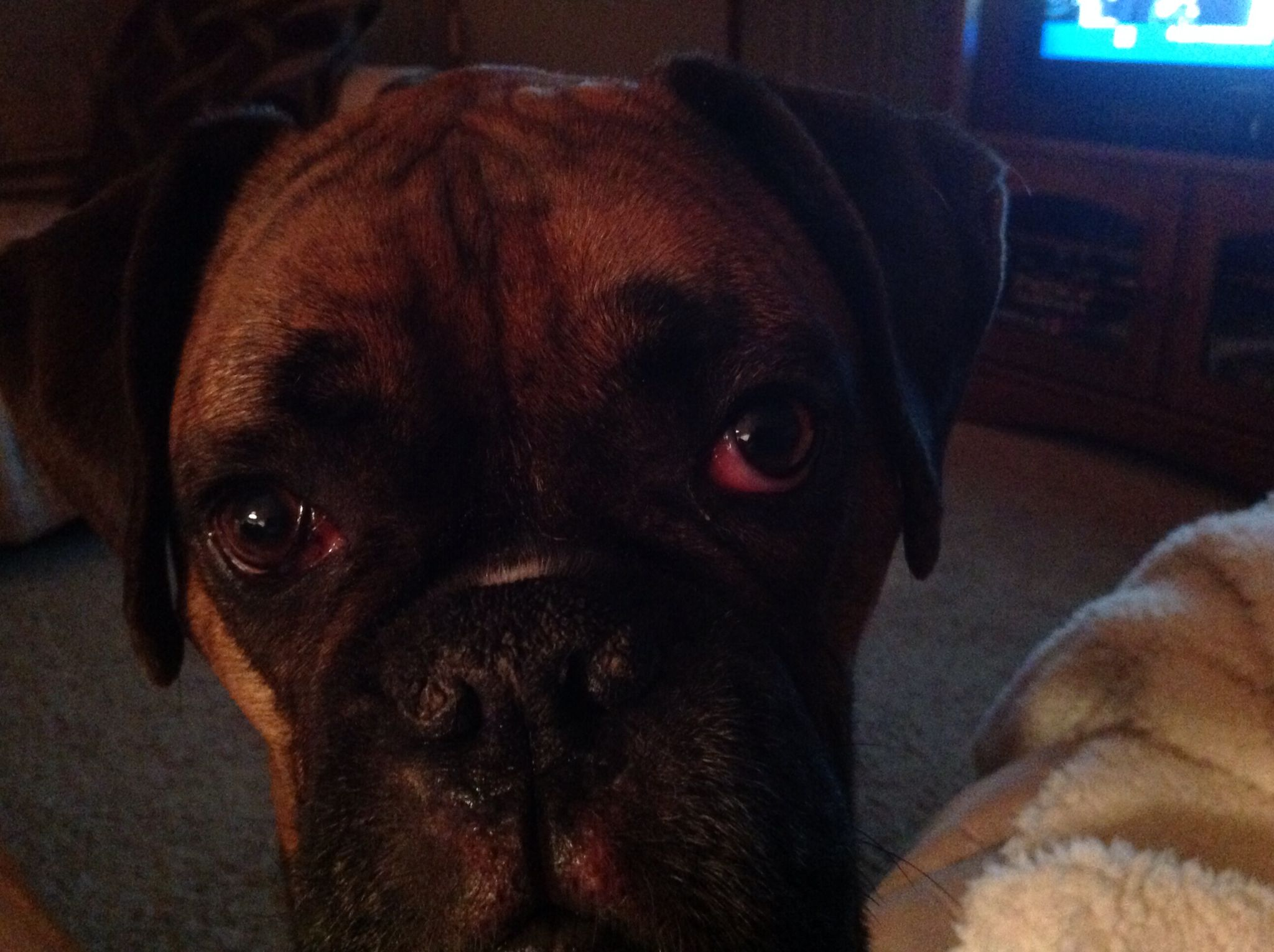 Brody, how can you not love that face!
