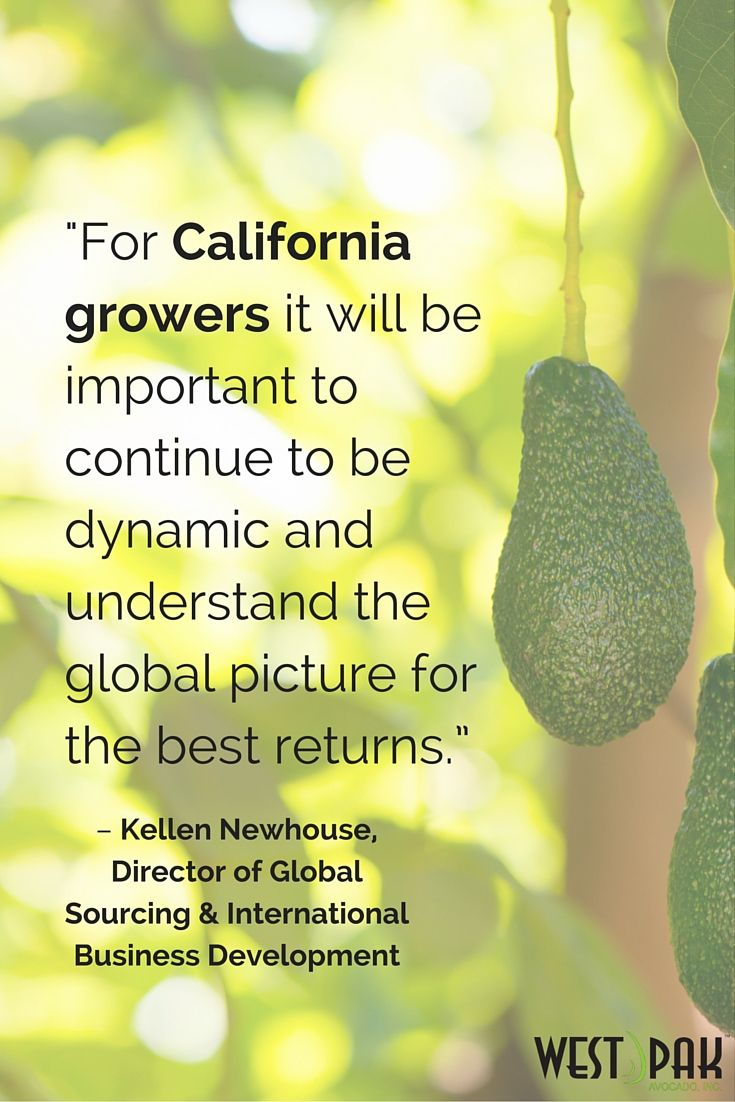 """The 2015 CA crop year was """"a great success""""  via the California Avocado Commission."""