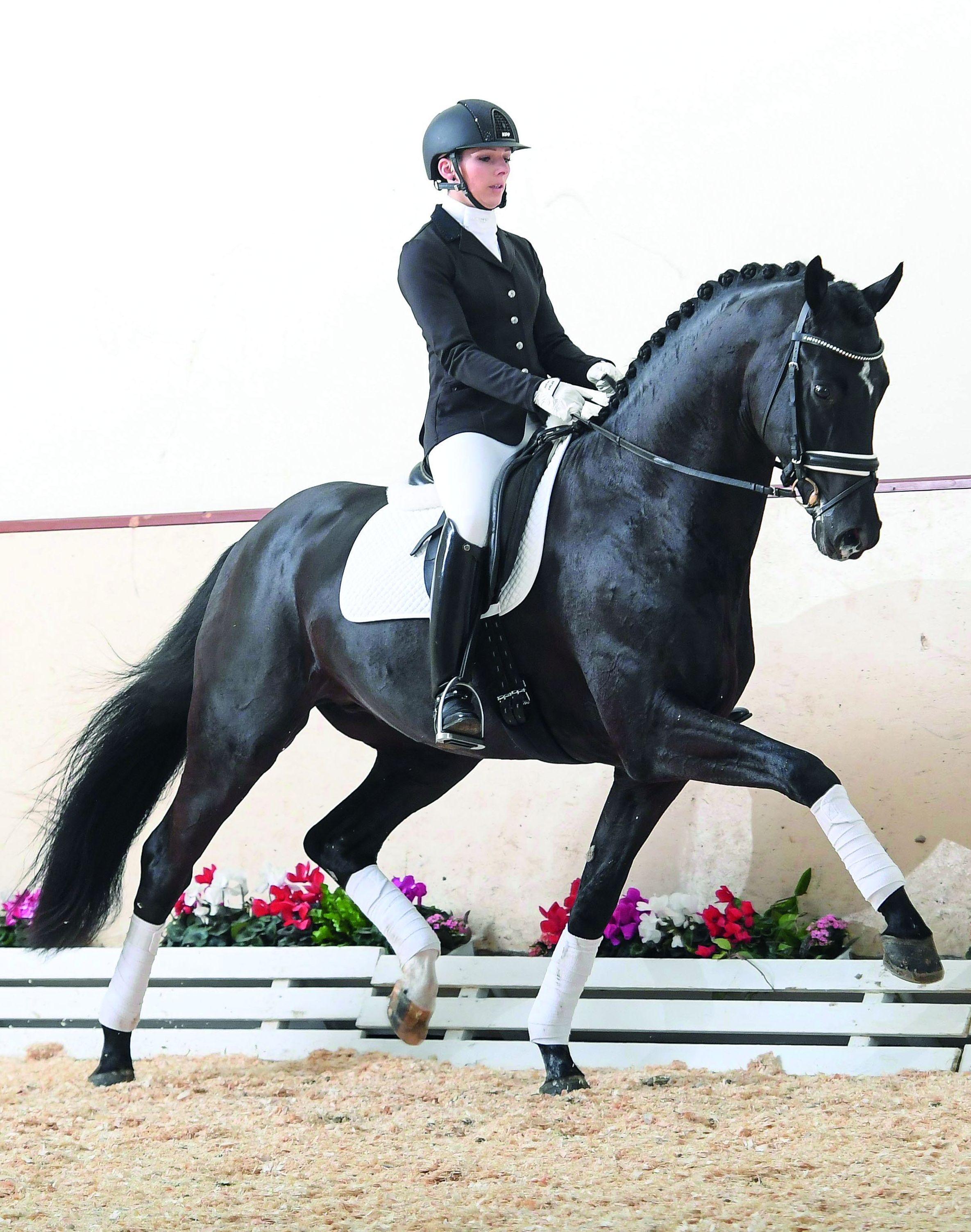 Pin Auf Pferde Treue Gefahrten