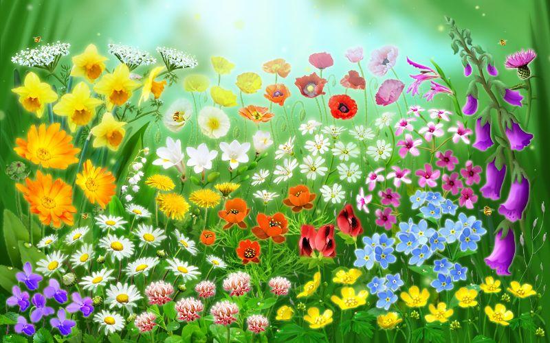 Смешная, картинка цветочная поляна анимация