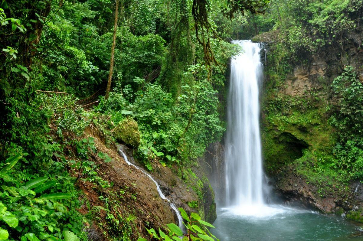 17810de6e19f21f9b0832ad1c616ed30 - Pura Vida Gardens And Waterfalls Jaco