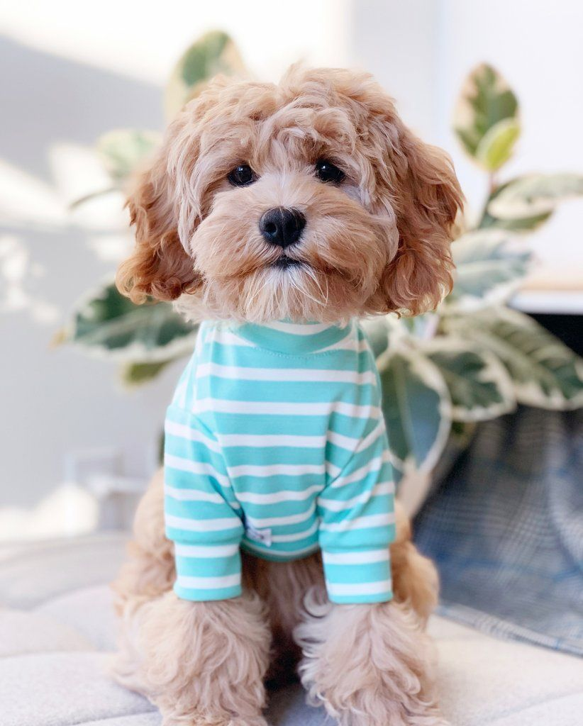 St Croix Sweater Cute Dog Clothes Dog Sweaters Hipster Dog