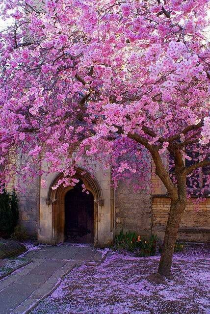 Pink Tree Pretty Trees Beautiful Gardens Flowering Trees