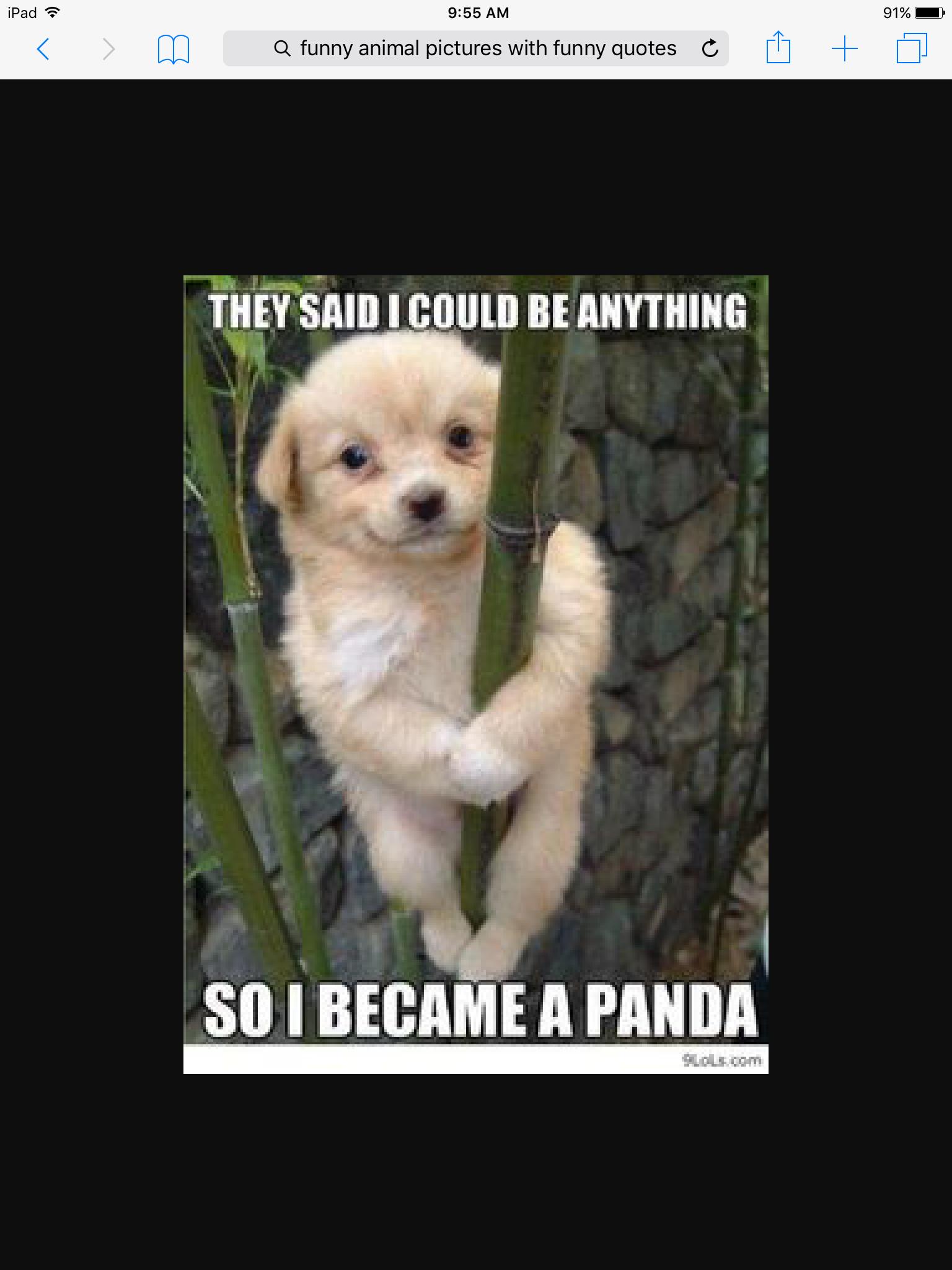 youre awesome meme dog