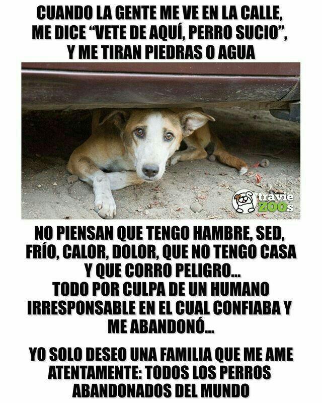 Perros Perros Perros Frases Perros Tristes