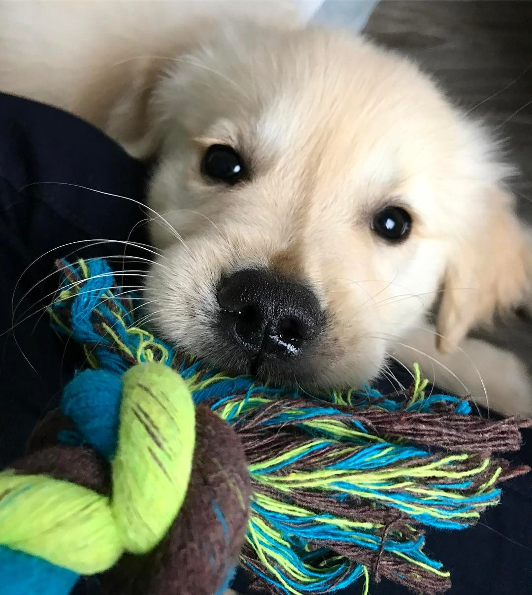 Pinterest Cmbenney Cute Dogs Dog Lovers Dogs