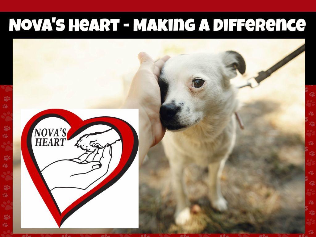 Nova S Heart Making A Difference In Shreveport Bossier City