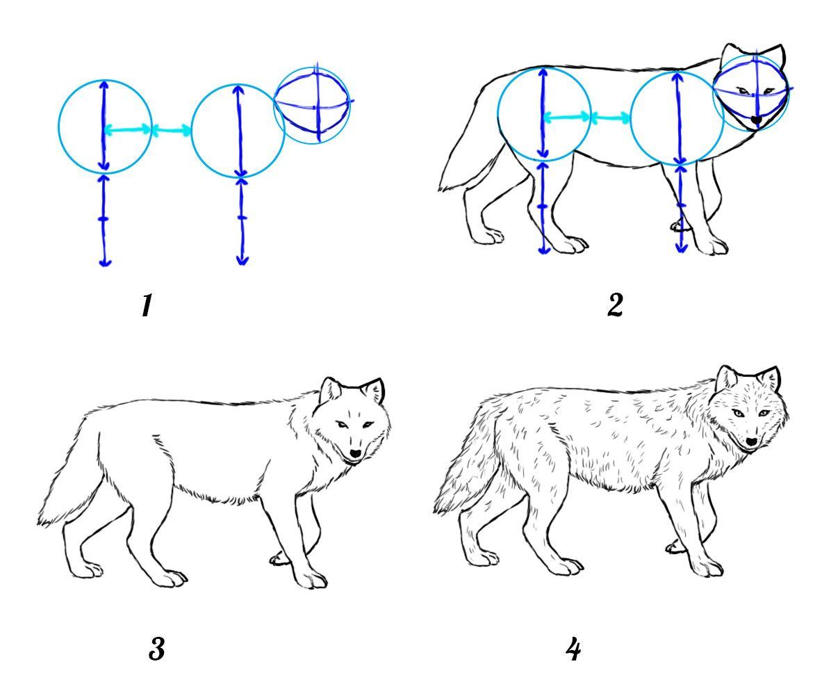 Comment Dessiner Un Loup Comment Dessiner Un Loup Comment