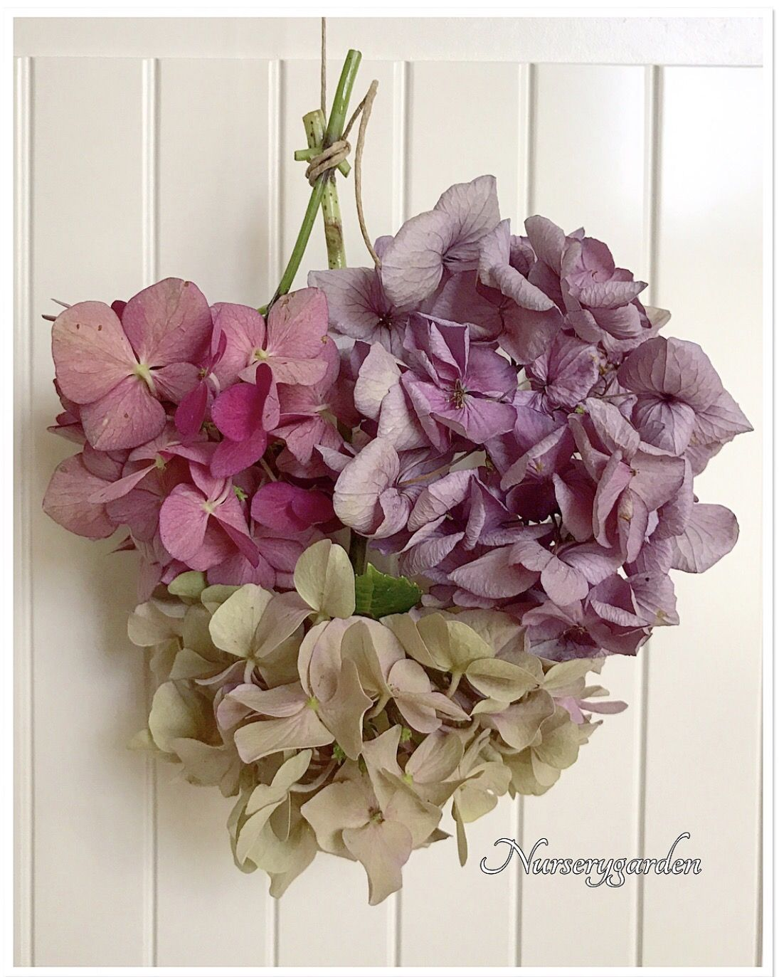 Come Far Fiorire Le Ortensie come essiccare le ortensie   ortensie, fioritura
