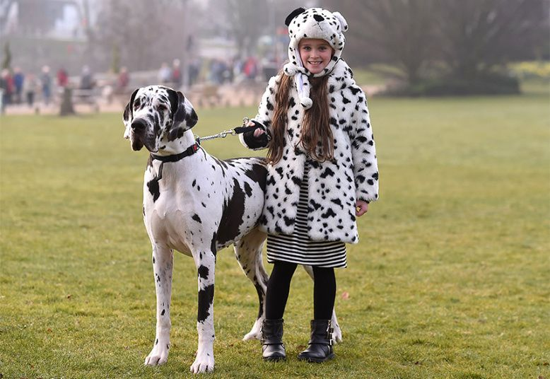 Crufts Dog Show Pedigree pooches compete for 'Best In