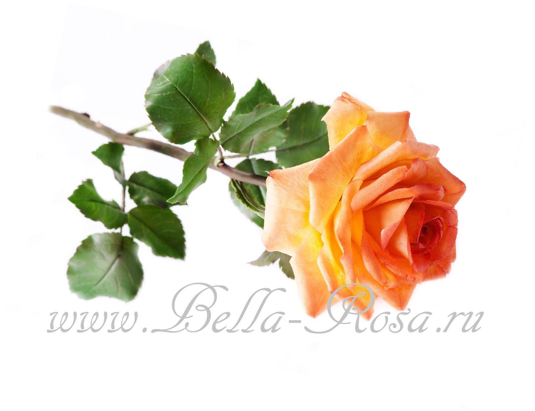 Белла роза керамическая флористика