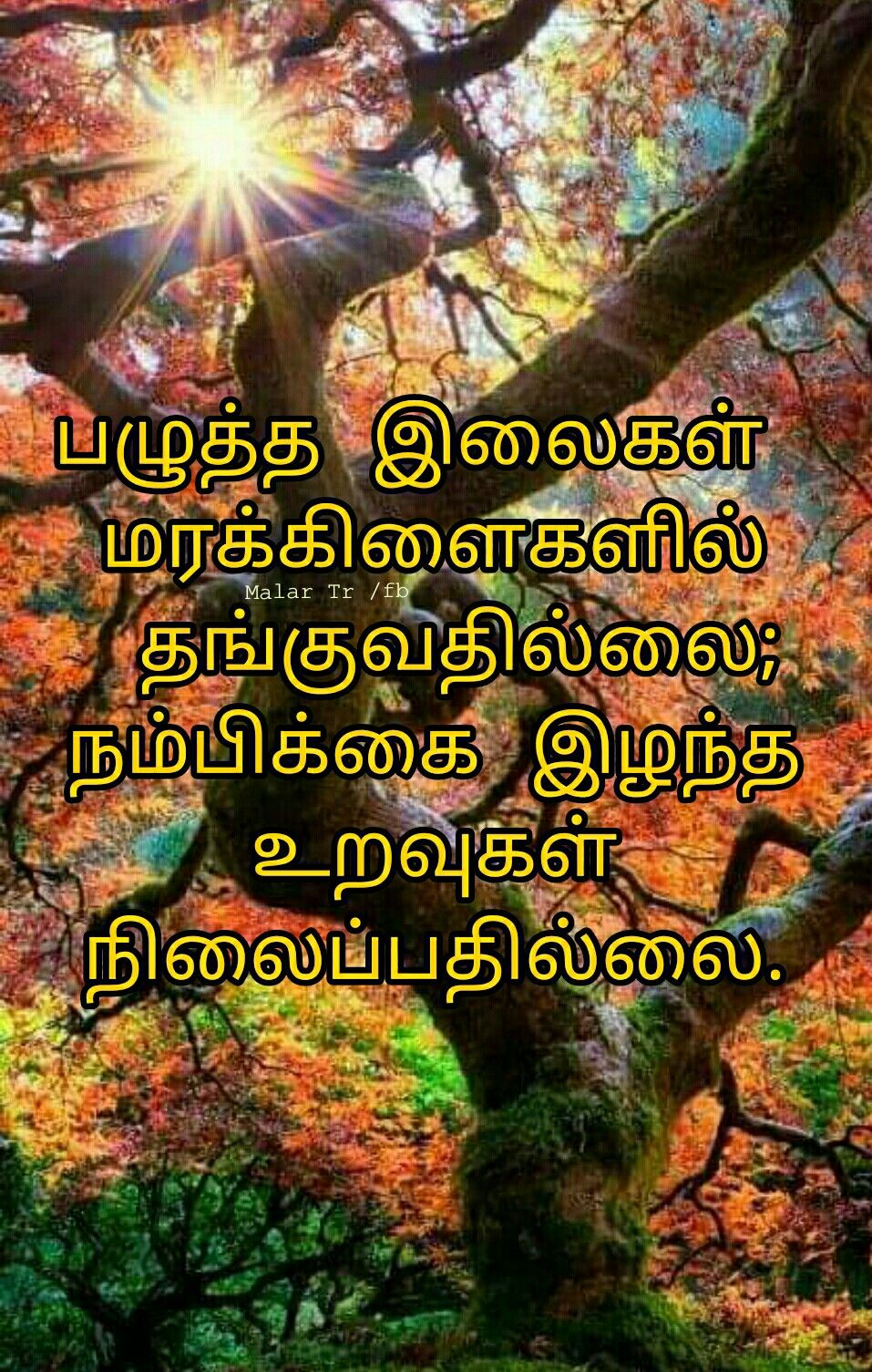 Pin by Malar Tr on Quotes in Tamil