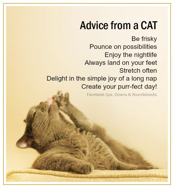 Image result for advice from a cat images