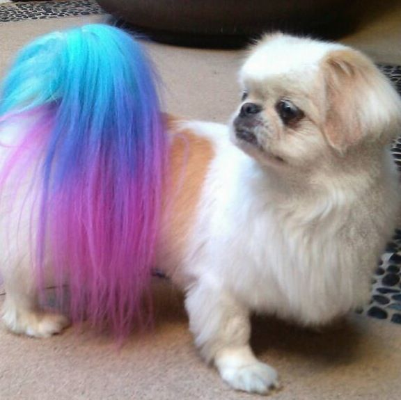 ☀opawz.com supply pet hair dye,pet hair chalk,pet perfume,pet ...