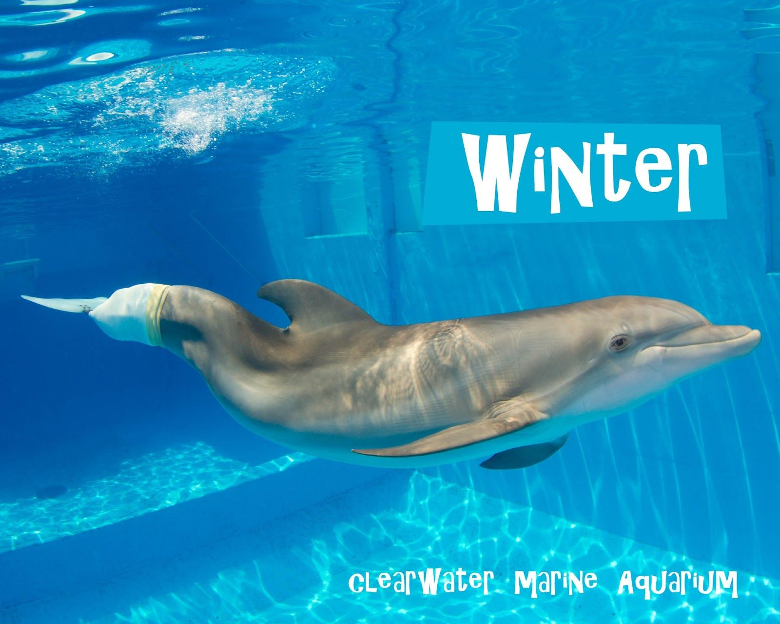 winter the dolphin pictures The Glam Green Girl Dolphin