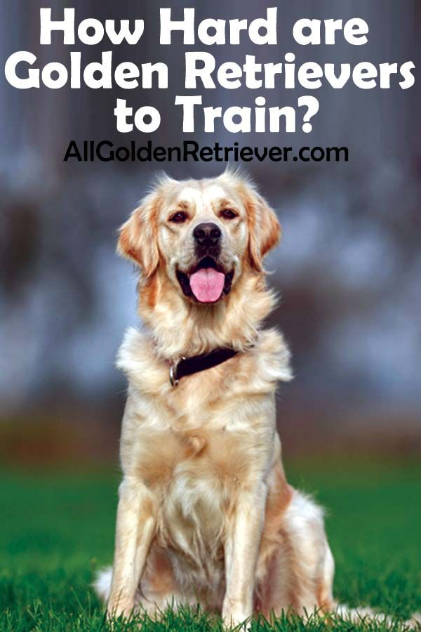 Whether Teaching These Animals From A Puppy To Their Elderly Years