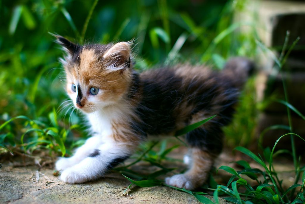 Post Pounce By Evan Travers Cute Cats And Kittens Cute Cats Calico Kitten