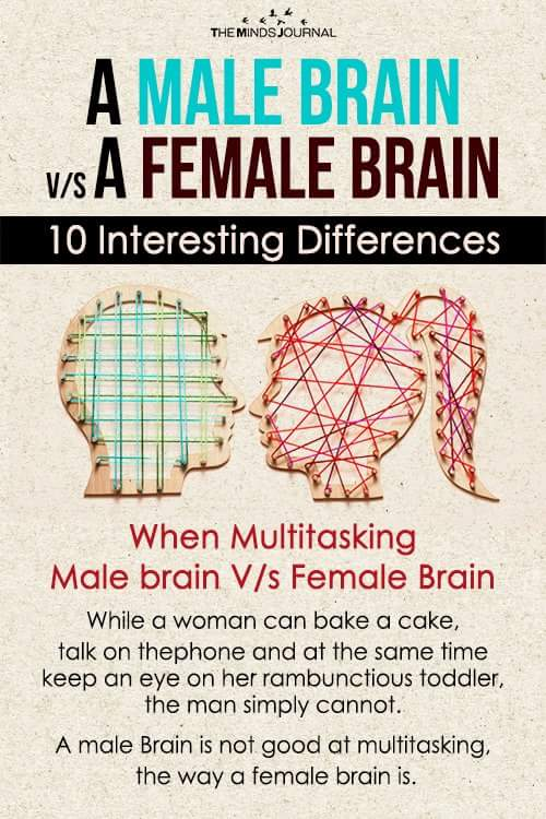 Male Brain Vs Female Brain Facts