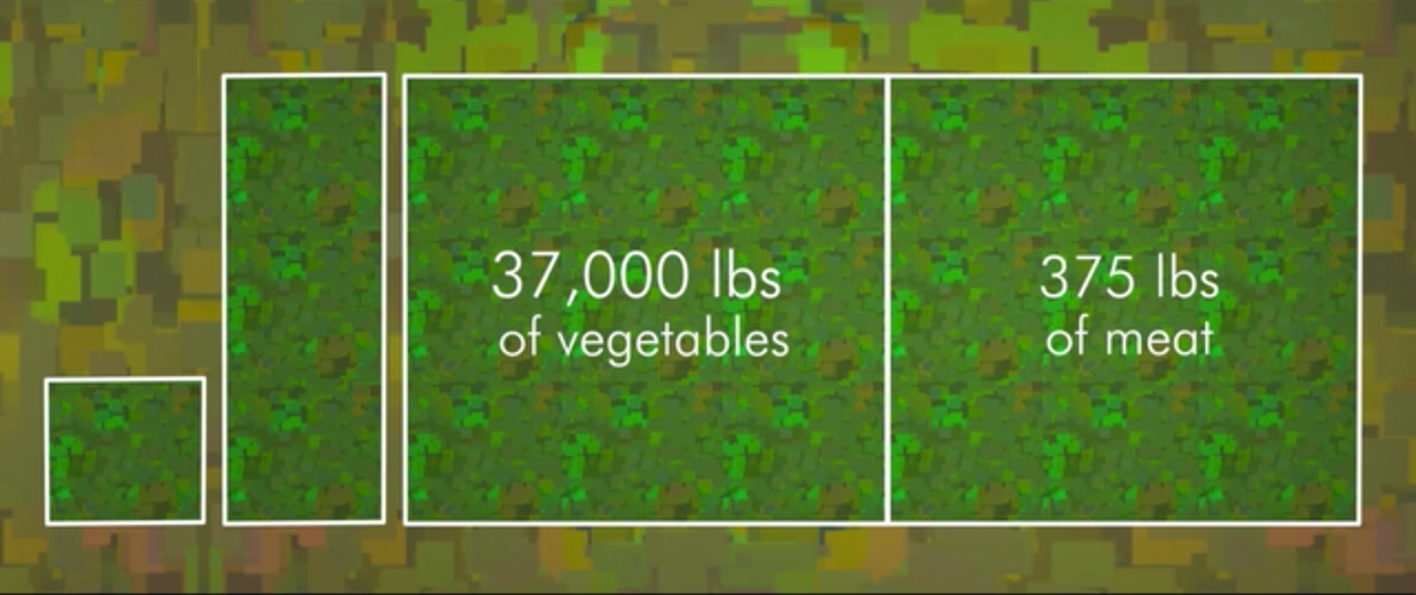 the same amount of land it takes to produce 375 lbs of meat, we can easily produce 37,000 lbs of vegetables; share natural resources and help reduce world hunger by living #vegan