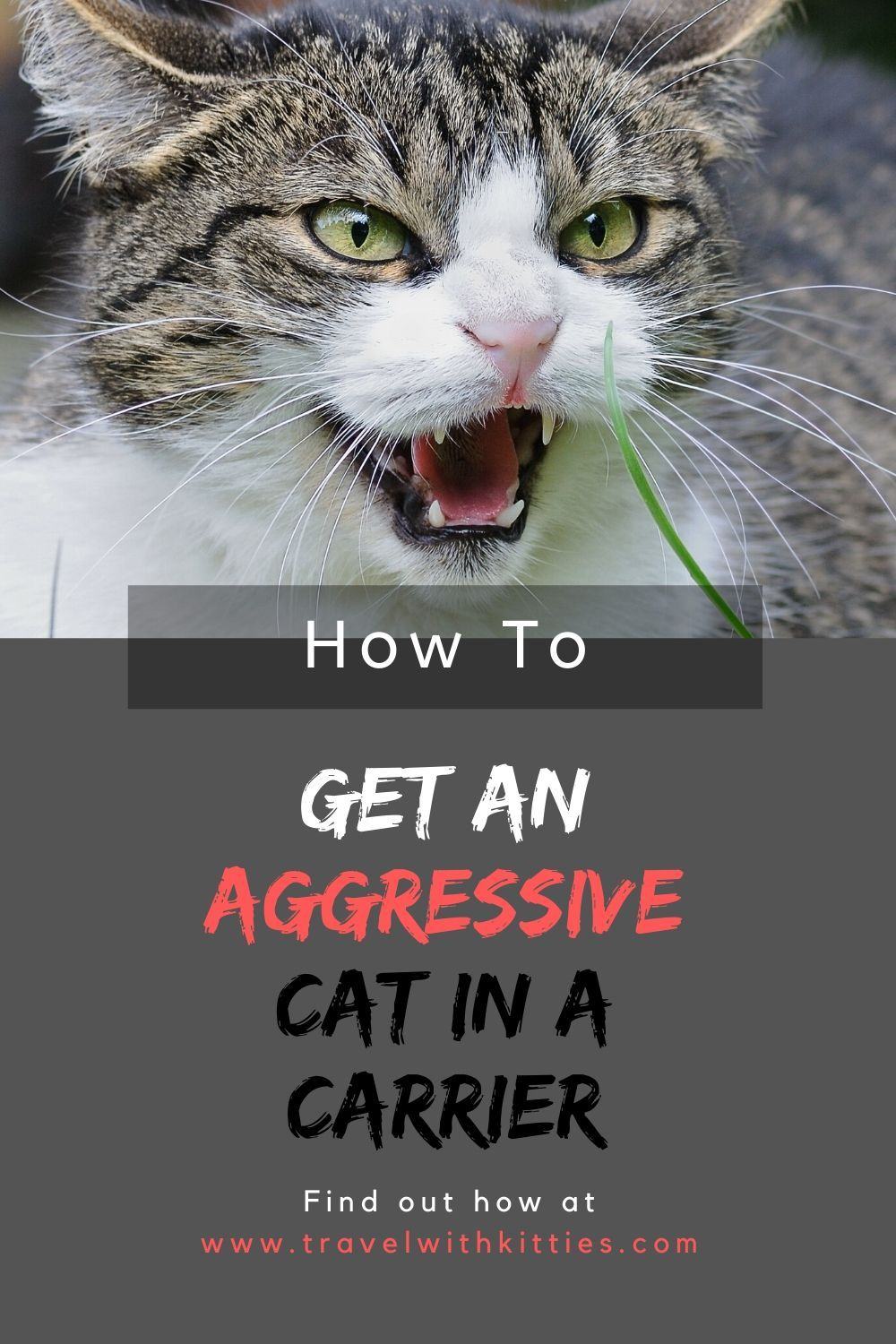 How to Get An Aggressive Cat Into a Carrier Easy Methods