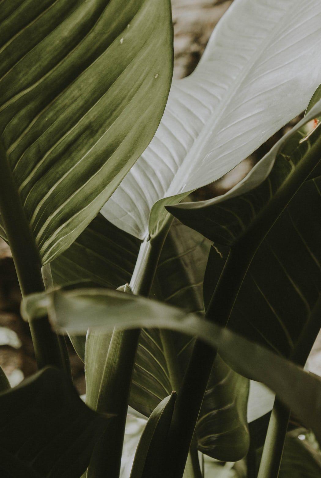 Plant, leaf, blossom and flower HD photo by Liubov