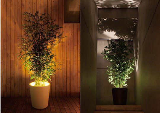 Forestarium Lamp Plants Planting Flowers Planters