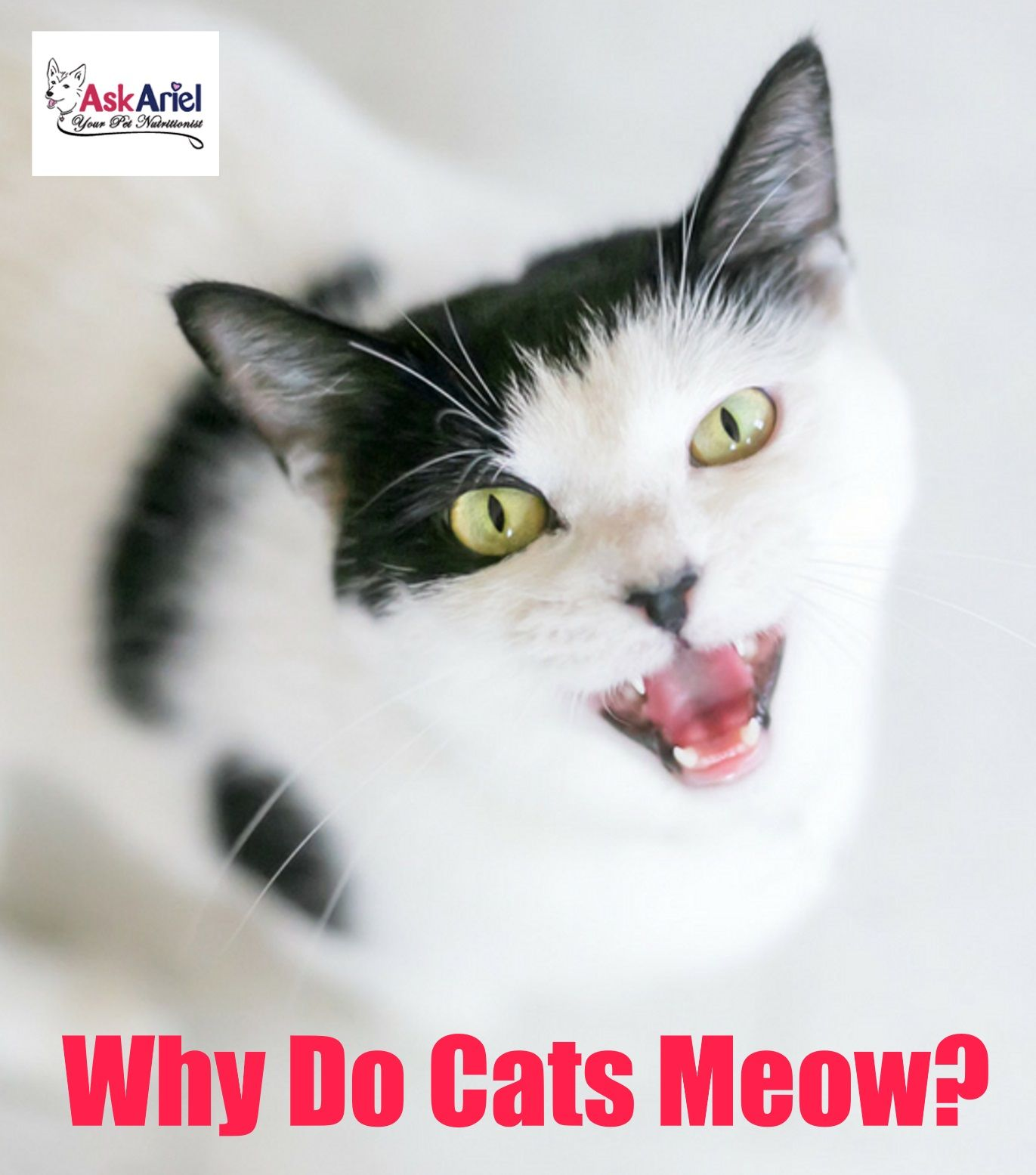 Do cats talk to each other? Of course they do, but meowing