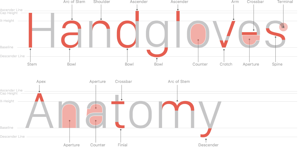 Anatomy Info Graphic