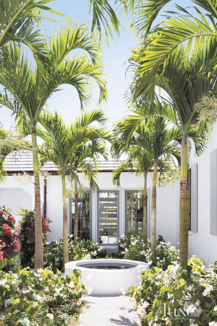 Modern White Courtyard With Tall Palm Trees Tropical Landscaping Palm Beach Gardens Landscape Design Plans