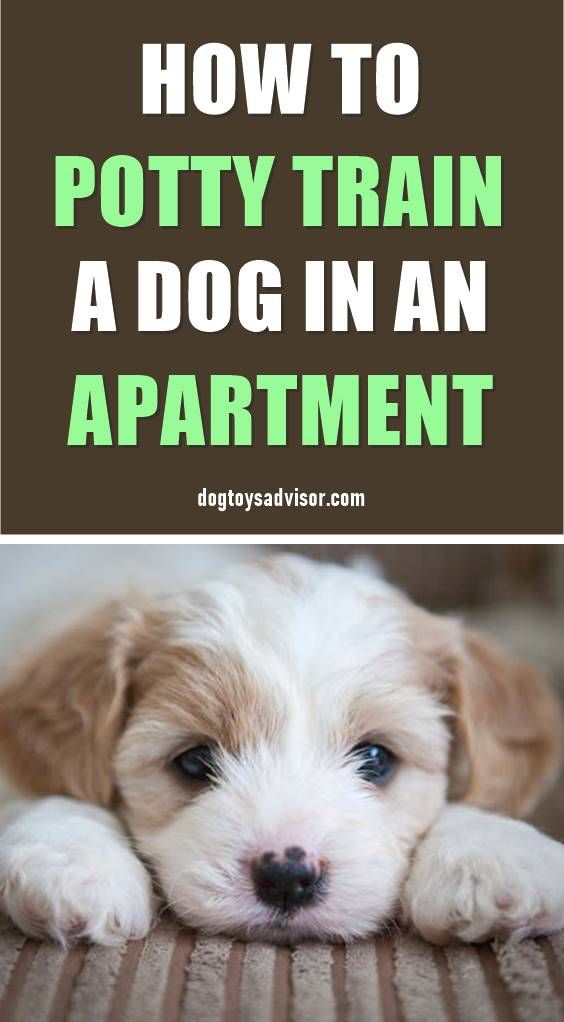 Potty Training A Puppy Is A Little Trickier When You Have An