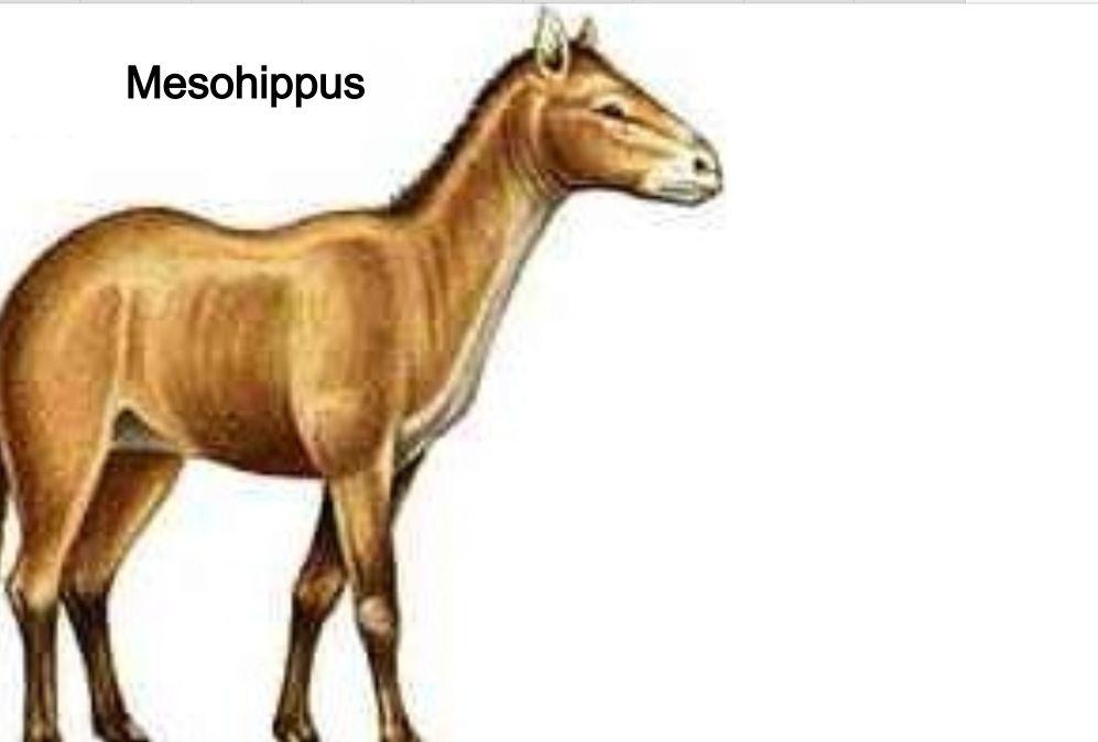 Equus questions