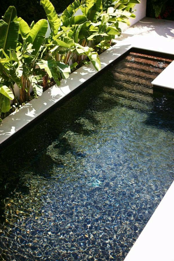 Clear Or Blue Bottom Small Pool Design Swimming Pools Backyard Small Backyard Design