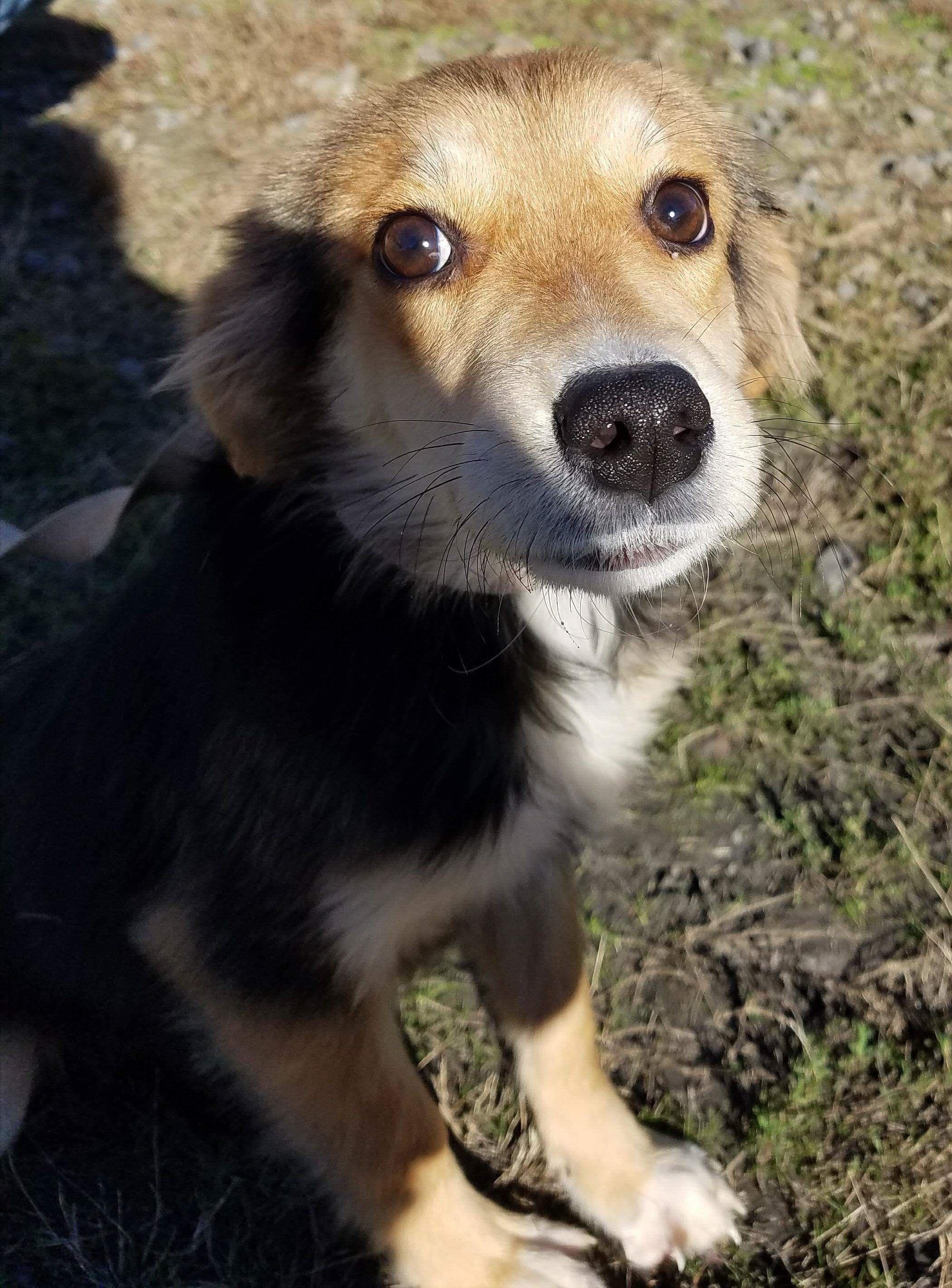 Adopt Holly On Petfinder Dog Adoption Animal Rescue Cute Animals