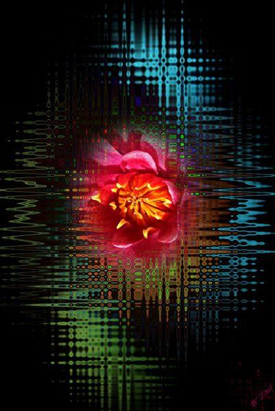 'Blütenträume 14' von Walter Zettl bei artflakes.com als Poster oder Kunstdruck $20.79