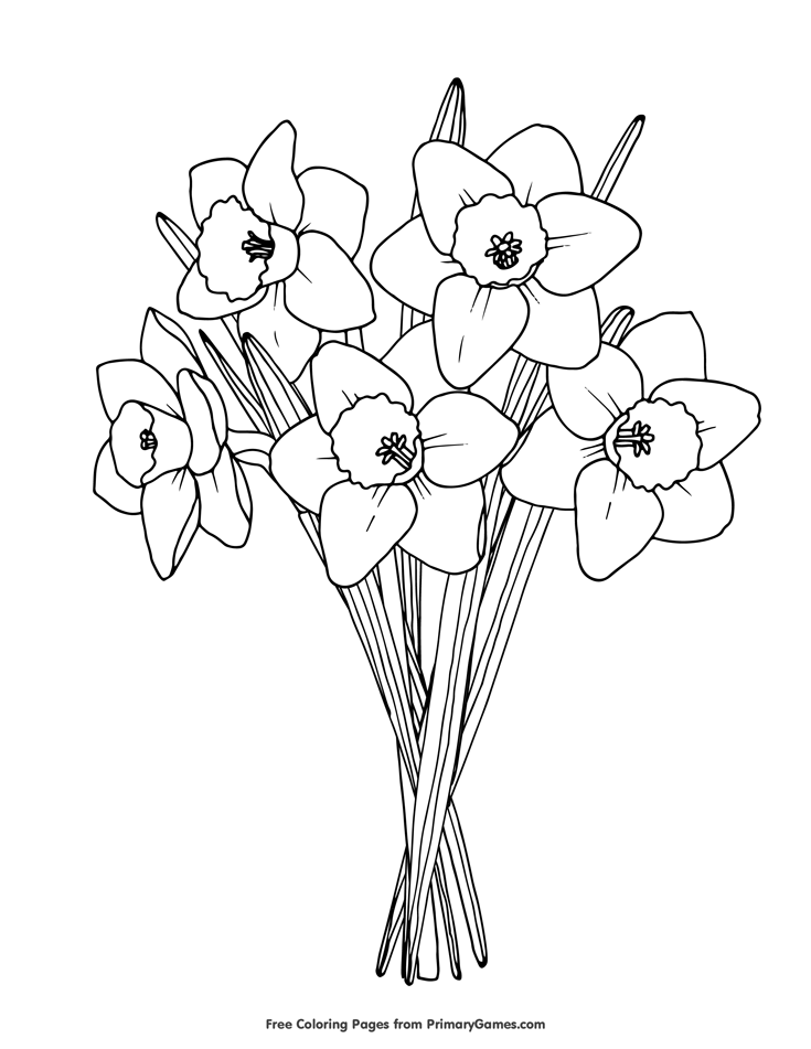 Spring Coloring Pages eBook: Daffodils