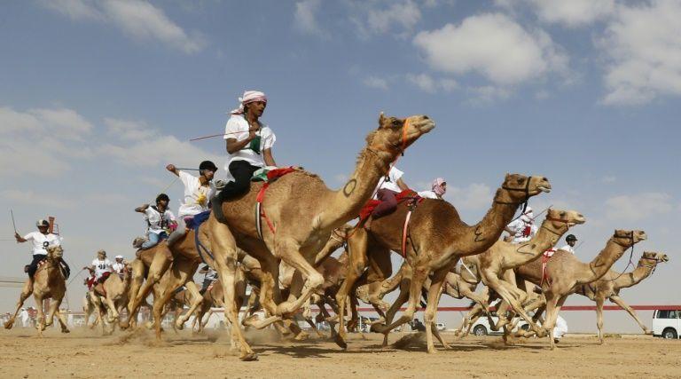 Jockeys' compiten en una carrera de camellos durante el tradicional festival Jeque Sultan Bin Zayed al-Nahyan, celebrado en el hipódromo Shweihan en Al-Ain, a las afueras de Abu Dhabi, el 12 de febrero de 2016