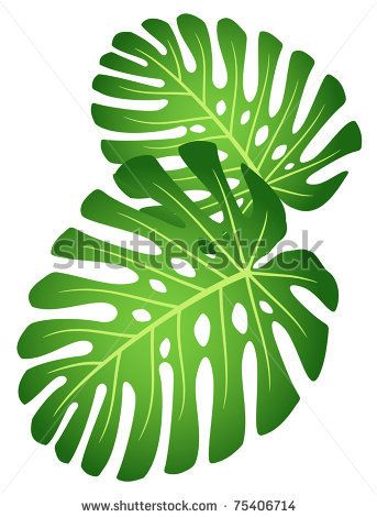 Leaves Of Tropical Plant - Monstera Stock Vector 75406714 - editable leaf template