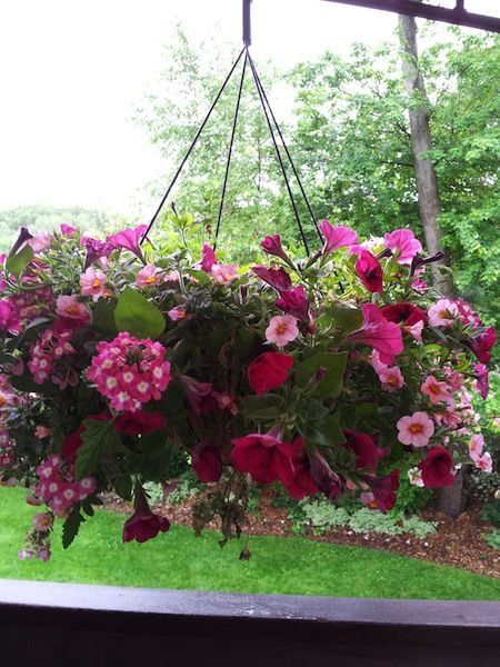 Lowes: 50% off Hanging Flower Baskets Clearance Find! | Cool