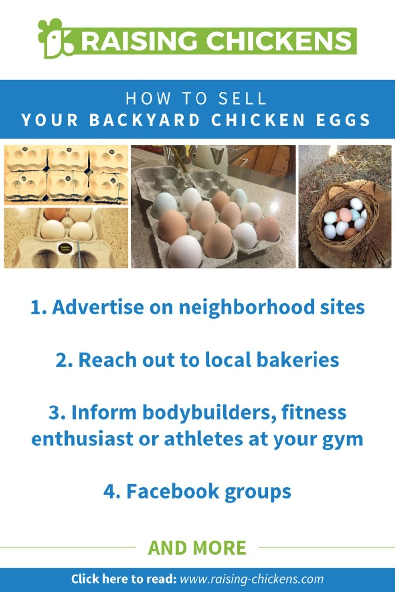How To Sell Backyard Chicken Eggs Great Ideas To Help You Sell Your Eggs Chickens Backyard Backyard Chickens Eggs Chicken Eggs