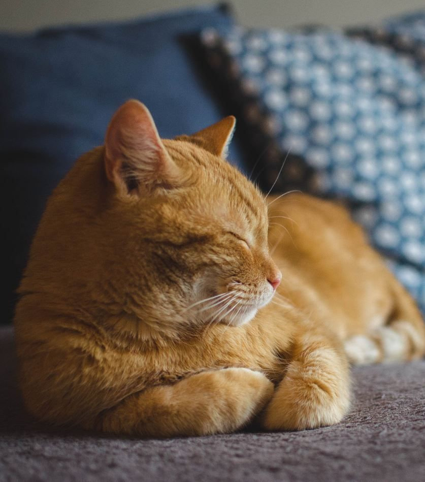 26 Most Adorable Cats Of All Time Tabbycat Orange Tabby Cats
