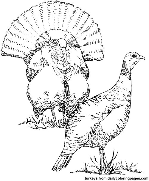 Turkey Pictures Coloring Pictures Hunting Drawings Turkey Drawing Bird Coloring Pages