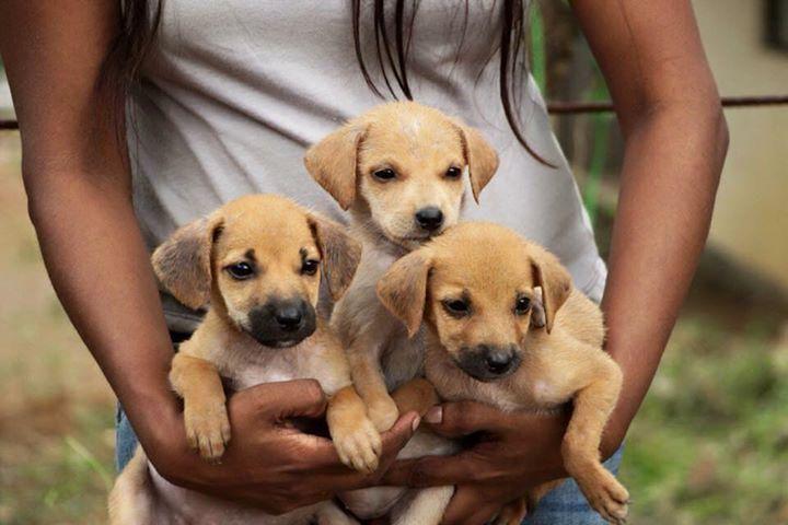 Embark Sri Lanka On Twitter Puppy Adoption Adoption Day Puppies