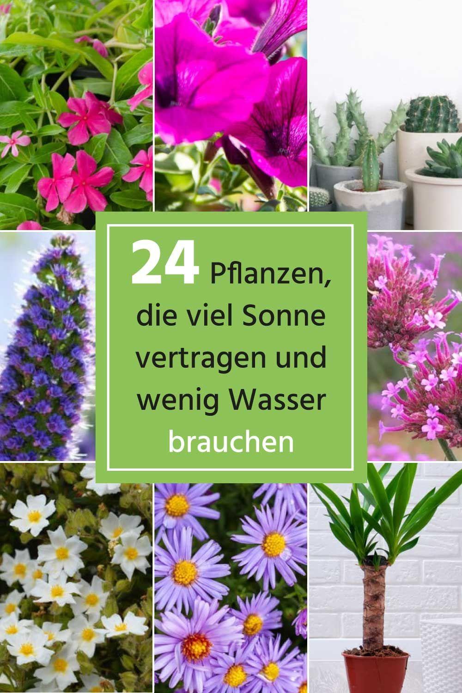 24 Pflanzen Die Viel Sonne Vertragen Und Wenig Wasser Brauchenen Pflanzen Garten Pflanzen Bepflanzung