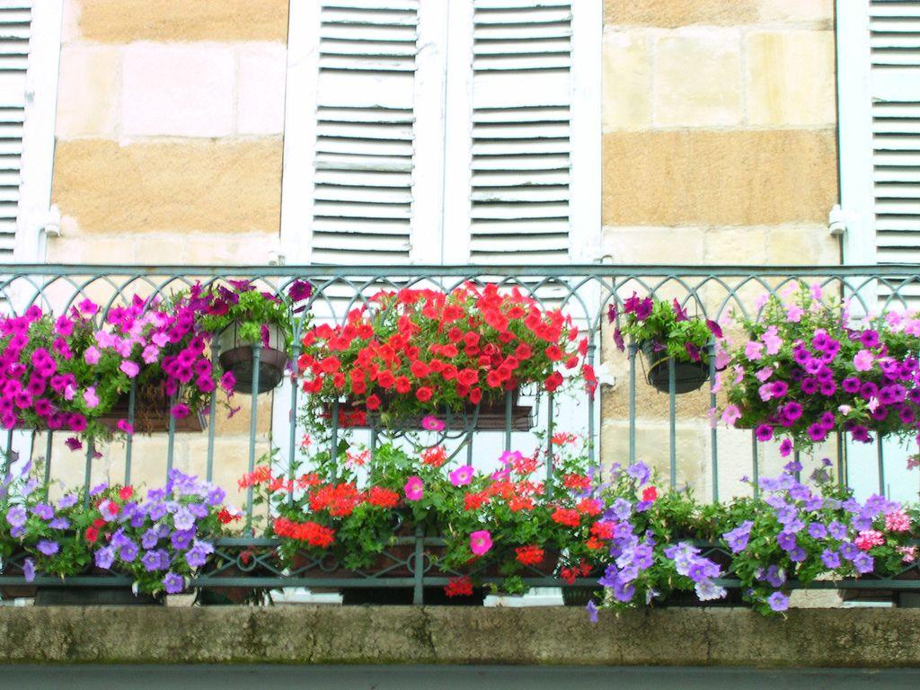les fleurs d 39 hiver pour balcon jardiner et planter pinterest balcons d courager et les fleurs. Black Bedroom Furniture Sets. Home Design Ideas