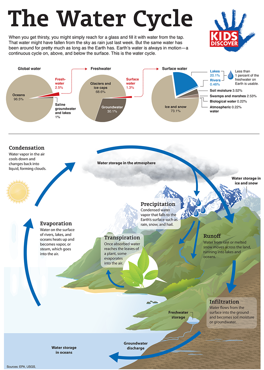 infographic: the water cycle - kids discover you have to register
