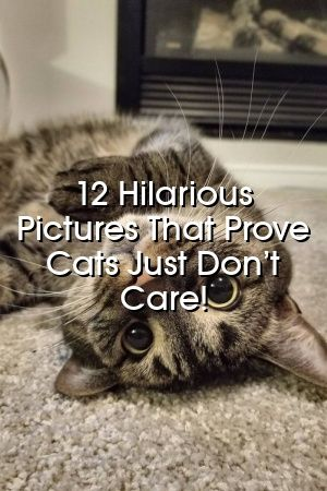 Amelia Cornish Tells About 12 Hilarious Pictures That Prove Cats Just Don't Care!   #cats  #pets  #world  #adoptdontshop  #lovecats  #fluffykittens  #Cat  #Colors