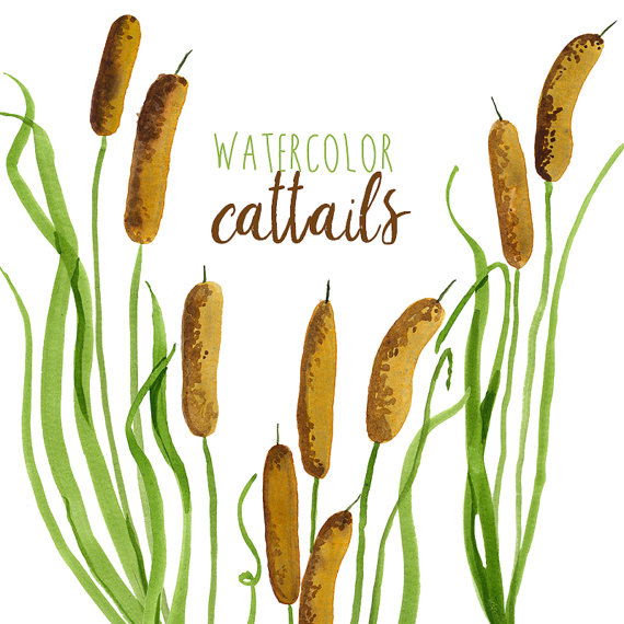 watercolor cattails clipart digital swamp images southern american rh pinterest com cattails clipart black and white Cattails in Pond