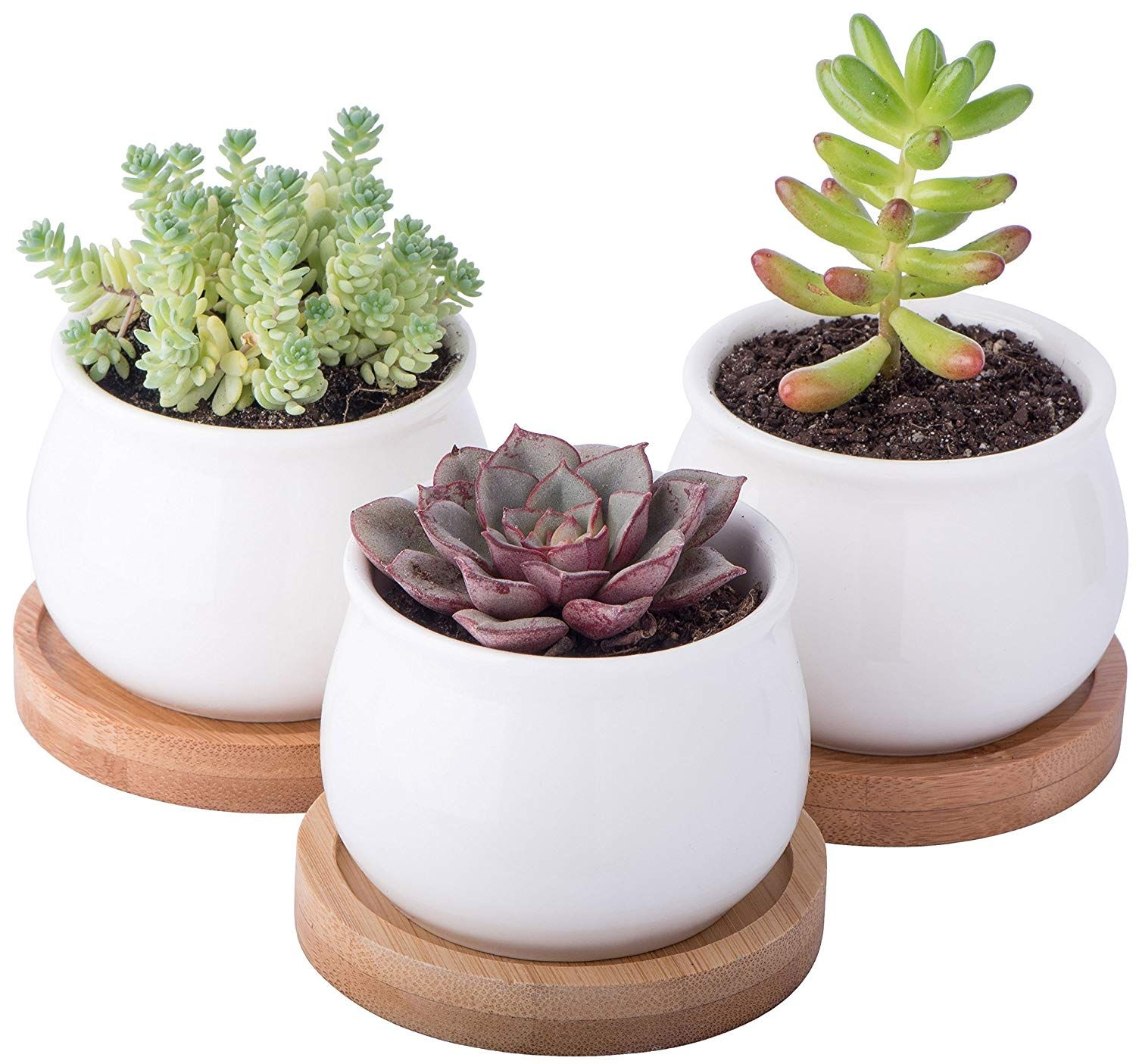 Home Home decoration trends of 2020 : Detailed review and information in  2020 | Ceramic succulent planter, Succulent planter, Succulent pots