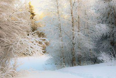 Winter beauty in Rovaniemi, Finland in November 2015